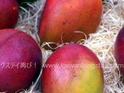 台湾産マンゴー通販 予約販売締切間近! 納得のお値段&送料無料で安心