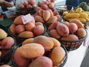 15種類の台湾マンゴー実食達成!いろんな台湾マンゴー画像で紹介です!