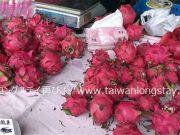 台湾フルーツ 旬のカレンダー【台湾フルーツ41種類を網羅!】